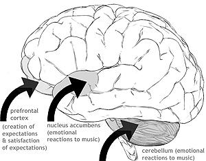 Cerveau et emotions.jpg